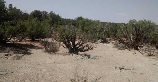 4248 Dusty Road - Photo 12