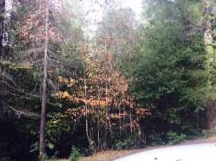 0 Forest Glade - Photo 14