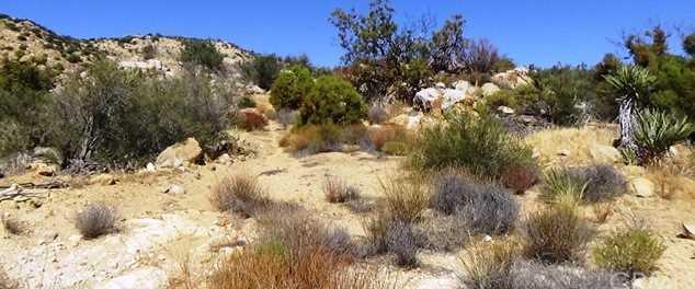 29 Covered Wagon Trail - Photo 10
