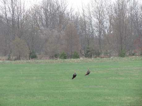 Meadow View - Photo 14