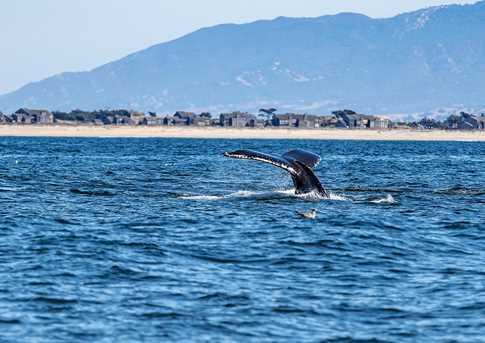 300 Monterey Dunes Way - Photo 12