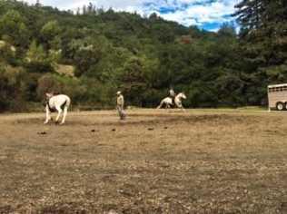 0 Redwood Retreat Rd - Photo 12