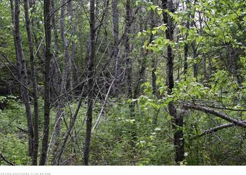 Map 7 Lot 23-2 Maxwell Rd - Photo 10