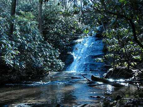 000 Falls Trail #65 - Photo 1