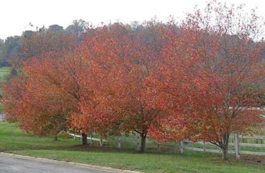 19  39 Wildwood Parkway #19-39 - Photo 4
