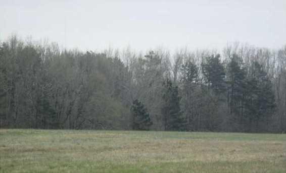 4435 Ridge Road - Photo 2