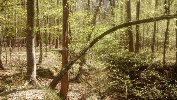 Shady Trail - Photo 8