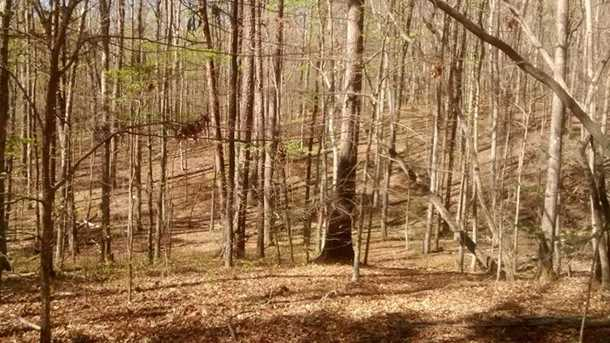Shady Trail - Photo 14