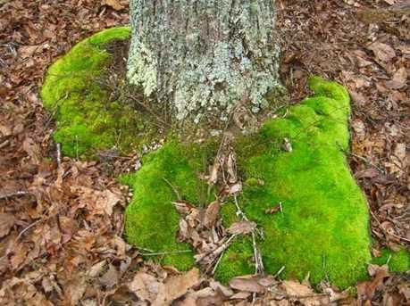0 Maplewood Trail - Photo 16