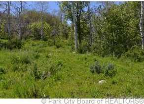 2980 Forest Meadow Road - Photo 4