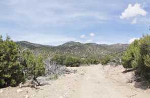 880 Acres Blue Mountain - Photo 12