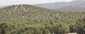 880 Acres Blue Mountain - Photo 14