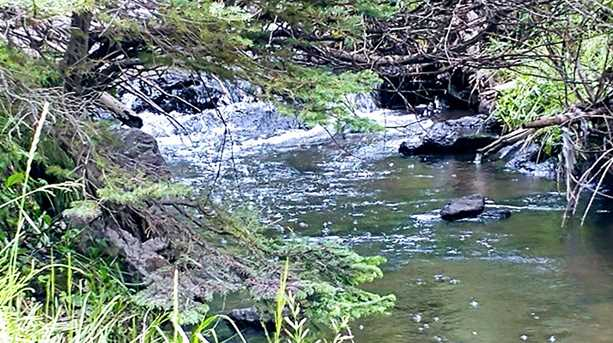 1000 W Clear Creek Canyon Rd #18 - Photo 2