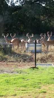 57 Ranch Road 12 - Photo 1