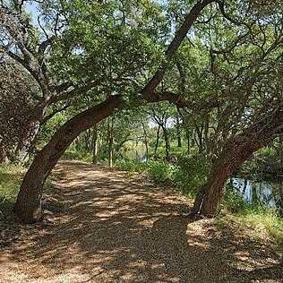 Lot 55 Rock N Robyn Trail - Photo 10