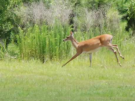 14 Squire Creek - Photo 8