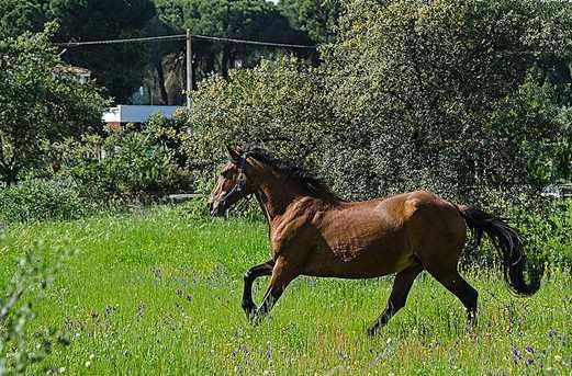15 Santa Catalina - Photo 18