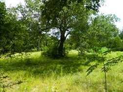 000 Cottonwood - Photo 4