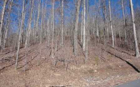 0 Woods Of Hunter #LOT 6 - Photo 4