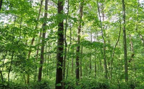 0 Shewbird Woods #2 - Photo 4