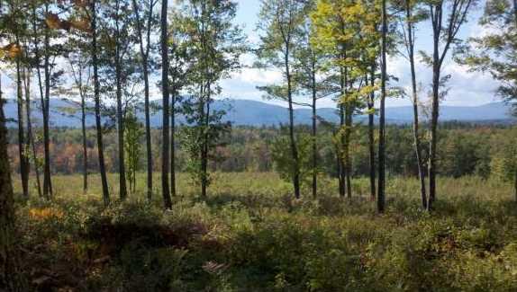 000 Mountain Rd - Photo 2
