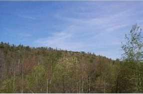 82 Ossipee Mountain Road - Photo 2