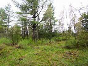 209 Coits Pond Road #Lot 3B - Photo 6