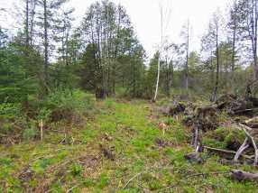 209 Coits Pond Road #Lot 3B - Photo 10