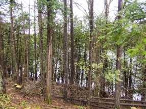 209 Coits Pond Road #Lot 3B - Photo 4