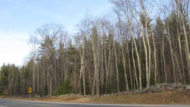 Lot #9 &amp 9-1 Old Wolfeboro Rd - Photo 2