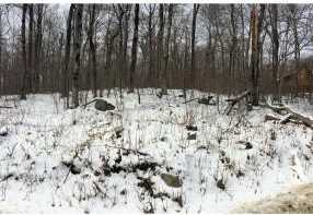 491/492 Scattered Timber - Photo 2