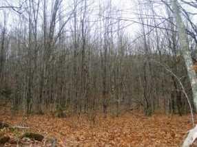 0 Pond Hill - Photo 2