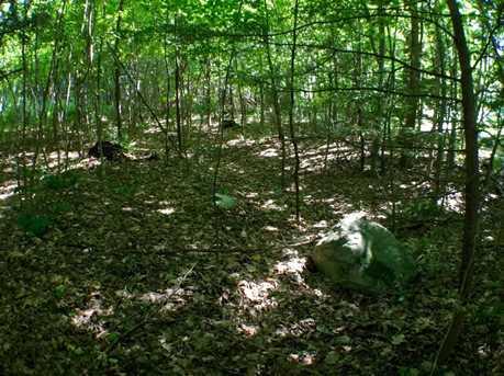 530 Finbars Forest - Photo 4