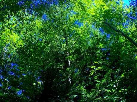 530 Finbars Forest - Photo 10
