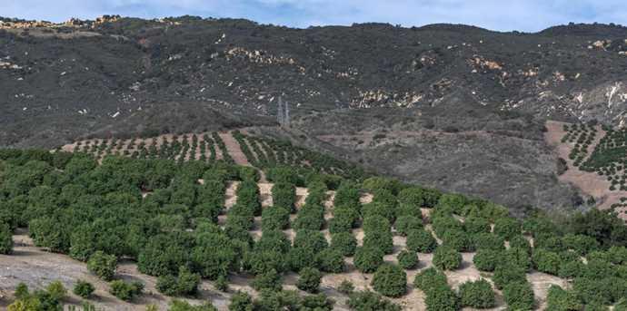 0 Rancho Del Ciervo - Photo 6