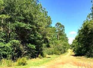 Vacantland Hidden Forest Trail - Photo 4