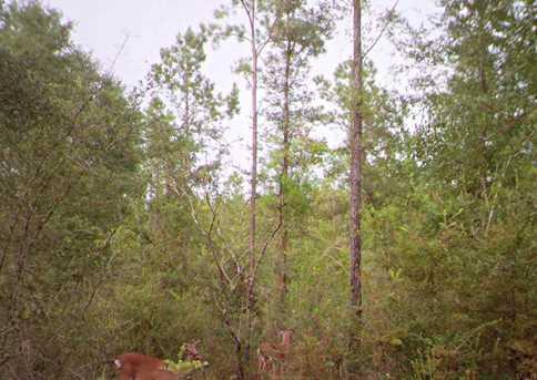 Vacantland Hidden Forest Trail - Photo 16