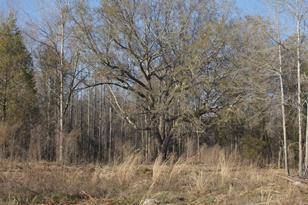 76 Turkey Oak Trail - Photo 1