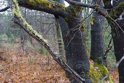 2719 Mistletoe Lane - Photo 1